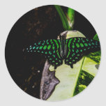 Mariposa manchada verde mágico etiqueta redonda