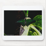 Mariposa manchada verde mágico tapetes de raton
