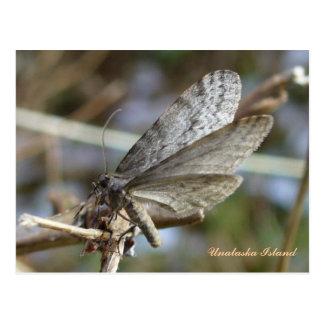 Mariposa masculina en una ramita postal