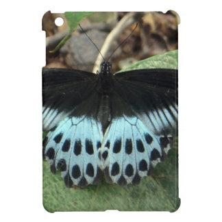 Mariposa mormona iridiscente azul