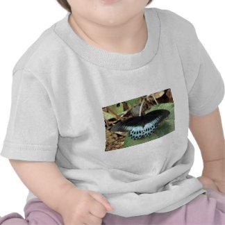 Mariposa mormona iridiscente azul camiseta