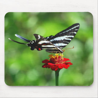 Mariposa Mousepad de Swallowtail de la cebra Alfombrillas De Raton