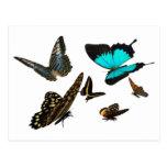 Mariposa multi postal