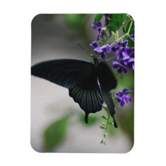 Mariposa negra bonita de Swallowtail Iman De Vinilo
