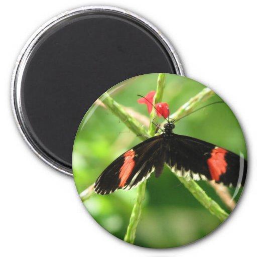 Mariposa negra con el imán redondo rosado