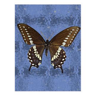 Mariposa negra de Oklahoma Swallowtail Postales