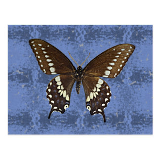 Mariposa negra de Oklahoma Swallowtail Tarjeta Postal