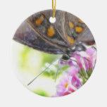 Mariposa negra de Swallowtail en el Buddleia Bush Ornamentos Para Reyes Magos