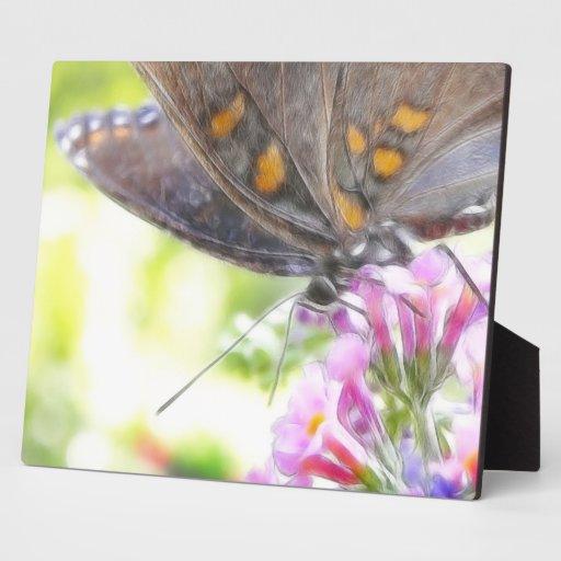 Mariposa negra de Swallowtail en el Buddleia Bush Placas Para Mostrar