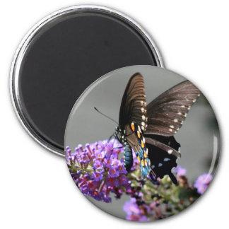 Mariposa negra de Swallowtail Imán Redondo 5 Cm