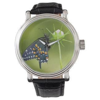 Mariposa negra de Swallowtail Relojes De Mano