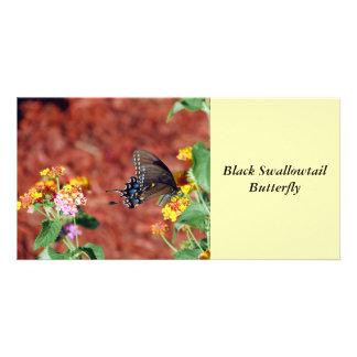 Mariposa negra de Swallowtail Tarjetas Fotograficas