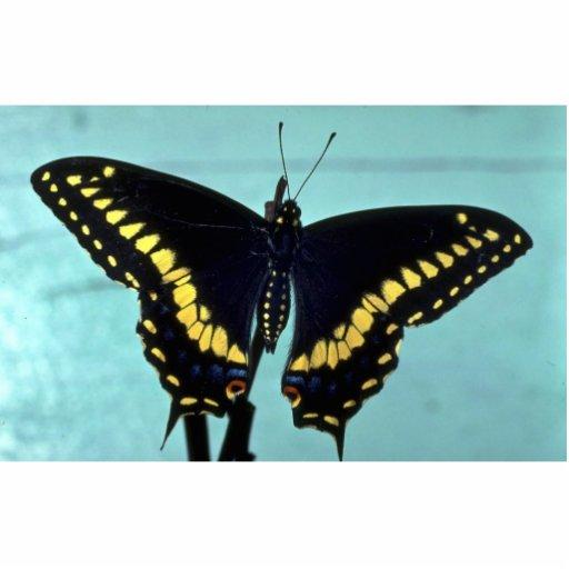 Mariposa negra del swallowtail fotoescultura vertical