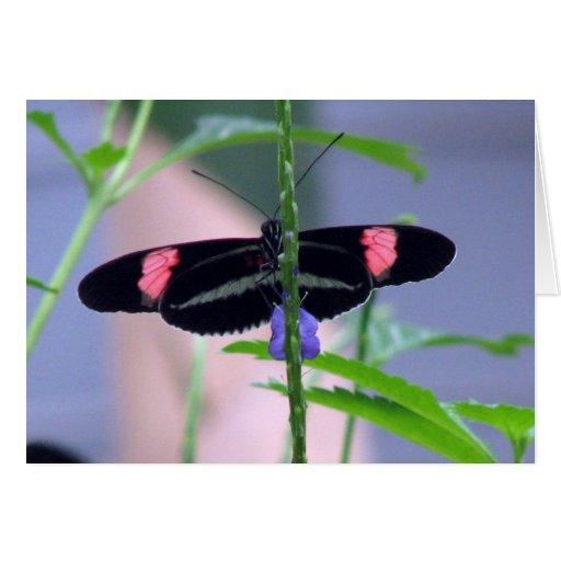 Mariposa negra en la flor azul tarjetón