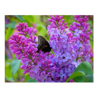 Mariposa negra en la postal de la lila