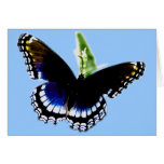 Mariposa negra felicitacion