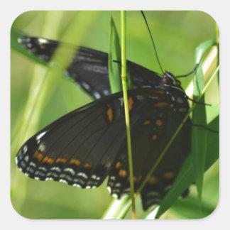 Mariposa negra hermosa que asolea en hierba calcomanía cuadrada