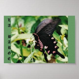 Mariposa negra posters