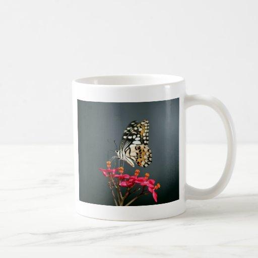 Mariposa negra y amarilla blanca en las flores tazas
