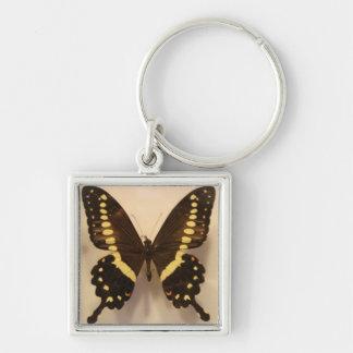Mariposa negra y amarilla llavero cuadrado plateado