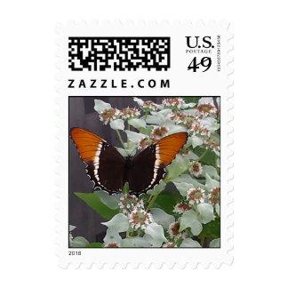Mariposa negra y anaranjada envio