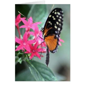 Mariposa negra y anaranjada tarjeta de felicitación