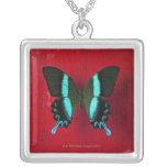 Mariposa negra y azul en la pared roja colgante cuadrado