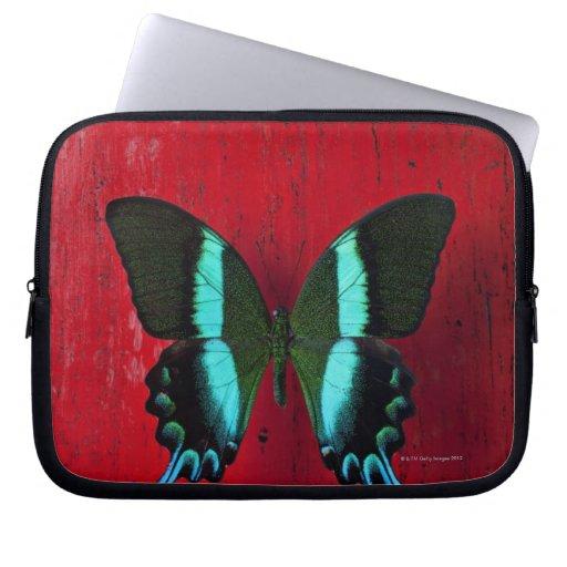 Mariposa negra y azul en la pared roja manga portátil