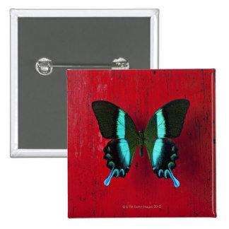 Mariposa negra y azul en la pared roja pin cuadrado