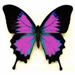 Mariposa negra y azul rosada para un amigo esculturas fotograficas
