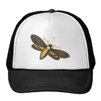 Mariposa nocturna moth gorros