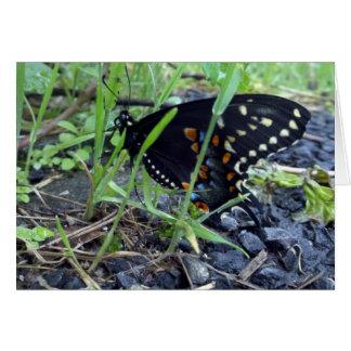 Mariposa Notecard2 Tarjeta De Felicitación
