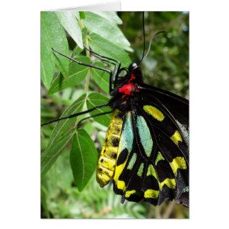 Mariposa Notecard de Birdwing de los mojones Tarjeta Pequeña