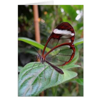 Mariposa Notecard de Glasswing Tarjeta Pequeña