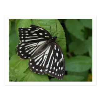 mariposa observada azul tarjetas postales