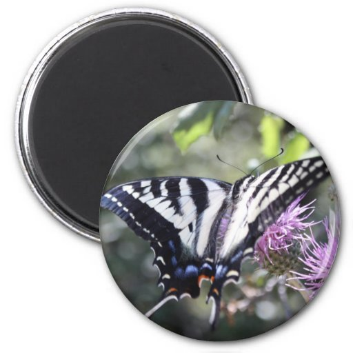 Mariposa occidental de Swallowtail del tigre Imán Redondo 5 Cm