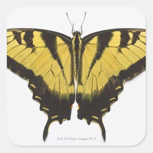 Mariposa occidental de Swallowtail del tigre Calcomanías Cuadradass Personalizadas