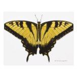 Mariposa occidental de Swallowtail del tigre Postal