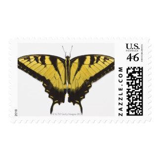 Mariposa occidental de Swallowtail del tigre