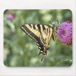 Mariposa occidental de Swallowtail del tigre Mousepads