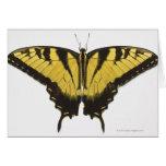 Mariposa occidental de Swallowtail del tigre Tarjeta