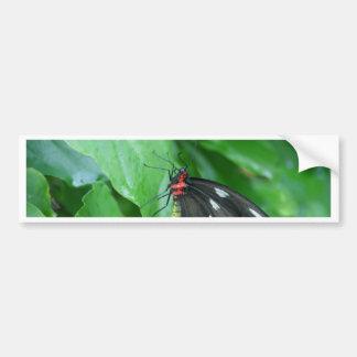 mariposa pegatina para auto