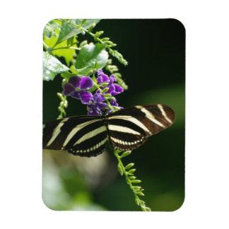 Mariposa perfecta de la cebra iman de vinilo