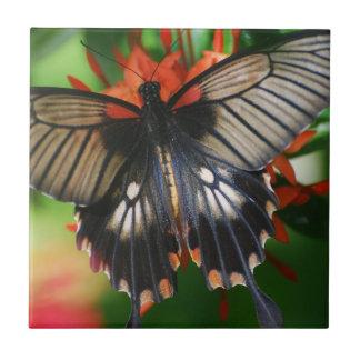 Mariposa perfecta de Swallowtail Azulejo Cuadrado Pequeño