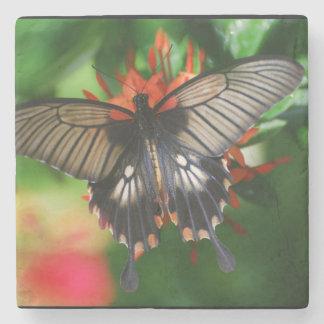 Mariposa perfecta de Swallowtail Posavasos De Piedra