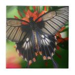 Mariposa perfecta de Swallowtail Tejas Ceramicas