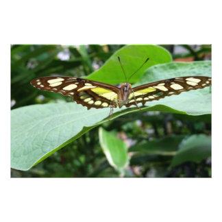 Mariposa Fotografia