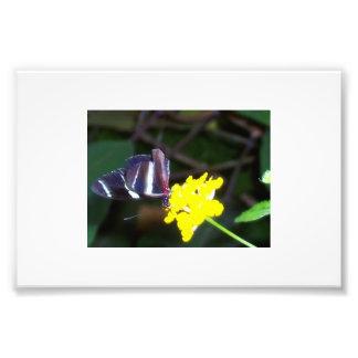 Mariposa Fotografía