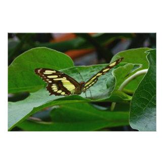 Mariposa Arte Fotográfico