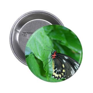 mariposa pin